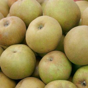 Jabłak - antonówka