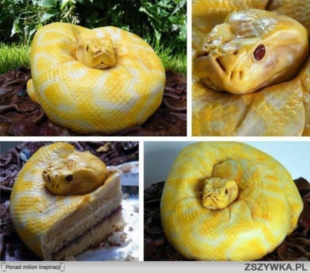 Tort - Wąż